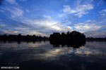 Borneo peat forest at sunrise [kalteng_0591]