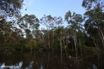 Peat forest in Borneo [kalteng_0595]