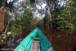 Navigating the peat forest in Borneo [kalteng_0597]