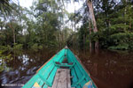 Navigating the peat forest in Borneo [kalteng_0598]
