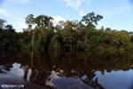 Peat forest in Borneo [kalteng_0608]
