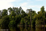 Peat forest in Borneo [kalteng_0626]