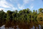 Peat forest in Borneo [kalteng_0639]