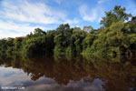 Peat forest in Borneo [kalteng_0645]