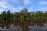 Peat forest in Borneo [kalteng_0661]