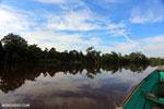 Peat forest in Borneo [kalteng_0662]