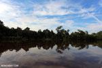 Peat forest in Borneo [kalteng_0665]