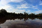 Peat forest in Borneo [kalteng_0666]