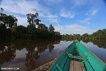 Borneo rainforest tour boat