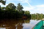 Borneo rain forest tour boat