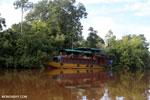 Deluxe Borneo rain forest tour boat