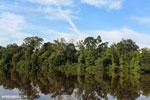 Peat forest in Borneo [kalteng_0676]