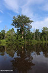 Peat forest in Borneo [kalteng_0682]