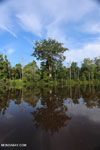 Peat forest in Borneo [kalteng_0683]