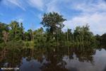 Peat forest in Borneo [kalteng_0685]