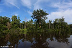 Peat forest in Borneo [kalteng_0687]