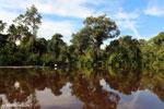 Peat forest in Borneo [kalteng_0694]
