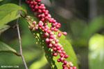 Berries [kalteng_0712]