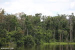 Peat forest in Borneo [kalteng_0766]