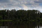 Peat forest in Borneo [kalteng_0771]