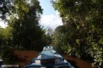 Navigating Borneo's peat lands