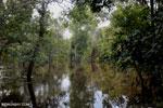 Borneo's peat lands