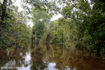 Borneo's peatforest