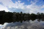 Borneo's peat lands [kalteng_1011]