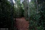 Kerangas forest