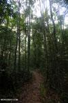 Kerangas forest [kalteng_1084]