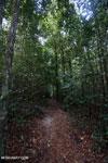 Kerangas forest [kalteng_1085]