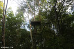 Observation platform in the Borneo rainforest [kalteng_1121]