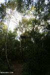 Observation platform in the Borneo rainforest [kalteng_1123]
