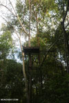 Observation platform in the Borneo rainforest [kalteng_1125]