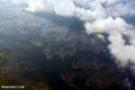 Airplane view of peat lands in Borneo