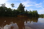 Peat forest in Borneo [kalteng_1170]