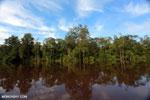 Peat forest in Borneo [kalteng_1171]