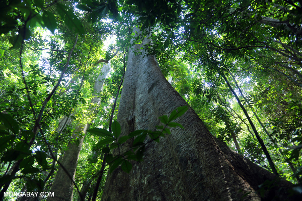 Rainforest in Aceh