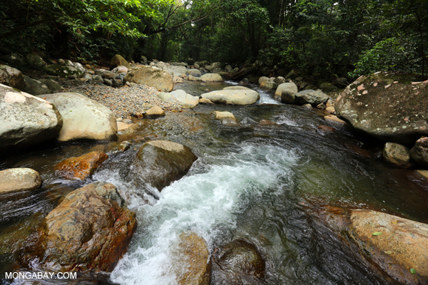 Rainforest stream near Jantho in Aceh, Indonesia.