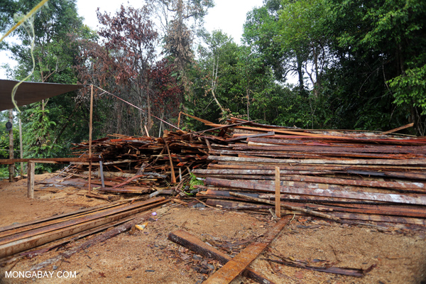 Stacks of illegally logged timber in Borneo. Photo by Rhett A. Butler / mongabay.com.