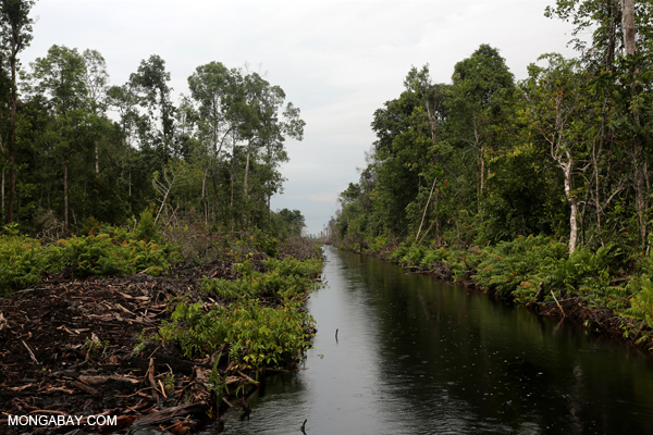 Canal running through peat forest in Indonesia