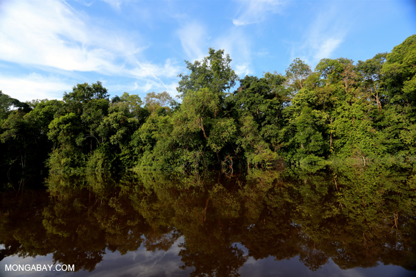Peat forest, a type of wetland, in Indonesia