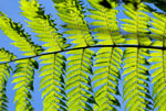 A fern in the Ebano Verde Scientific Reserve in the Dominican Republic.