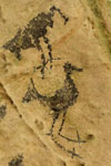 Taino cave painting of a bird in Los Haitises National Park in the Dominican Republic.