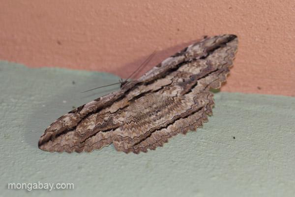 A moth in Pedernales, Dominican Republic.