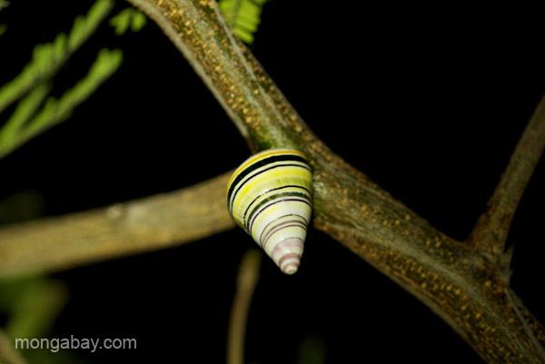 A snail near Pedernales, Dominican Republic.