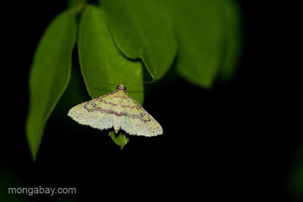 A moth near Pedernales, Dominican Republic.