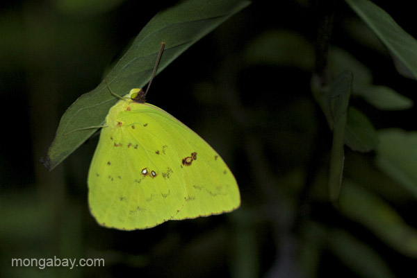 A butterfly near Pedernales, Dominican Republic.