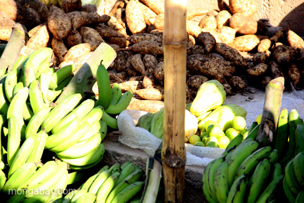 Plantains and other foods for sale at the bi-weekly Haitian market in Pedernales, Dominican Republic.