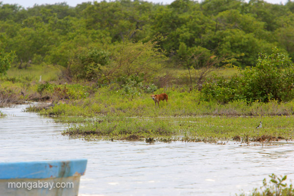 Stray dog at the Oviedo Lagoon in the Dominican Republic.